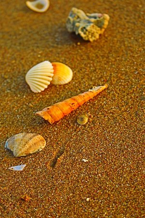 Sanya Redaiyulin Square: Sea shell n crab