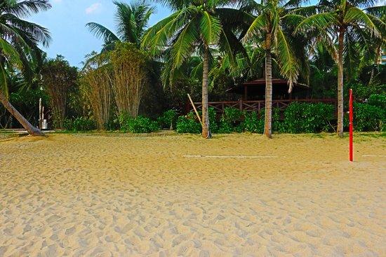 Sanya Redaiyulin Square: Coconut tree