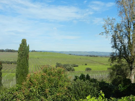 Coriole Winery: peace and quiet
