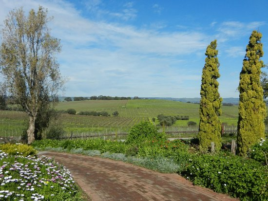 Coriole Winery: Stunning views