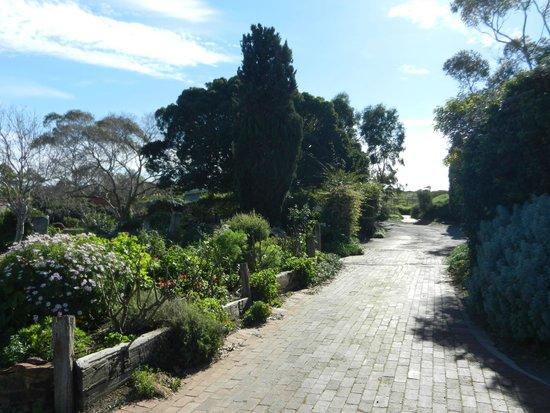 Coriole Winery: a short walk