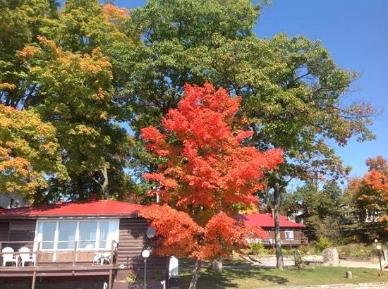 Viamede Resort : fall colors