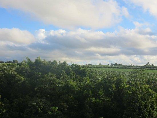 Guadeloupe National Park : Chute du Carbet