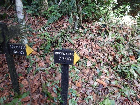 Danum Valley Field Center: Self guided walks around the centre