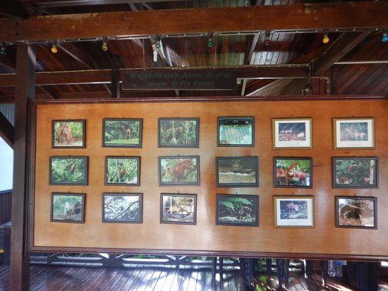 Danum Valley Field Center : Boards at the dining area showing some wildlife to look out for