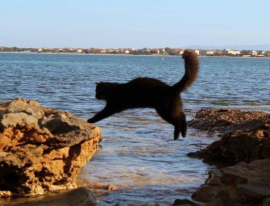 San Vero Milis, Ιταλία: Ciupa in volo: tutti i gatti di Su Pallosu sono schedati .