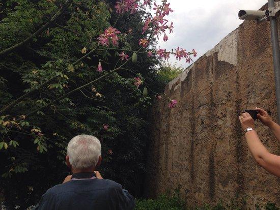 Palazzo dei Normanni: L'albero del falso cotone vi accoglie lungo il vialetto e saprà stupirvi  per le sue spine su tr