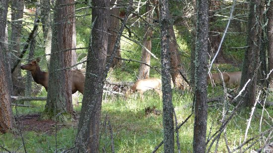 Beaver Ponds Loop Trail : Watch out for elk