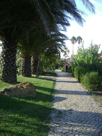 Quinta Do Mar Da Luz: palms