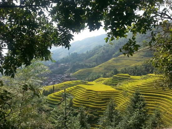 Longji Mountain: The Zhuang Village from the mountain