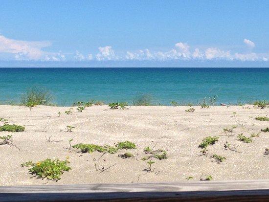 Shucker's ocean view