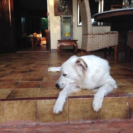 "Wonders Boutique Hotel: the ""Hotel dog"" Griffin"