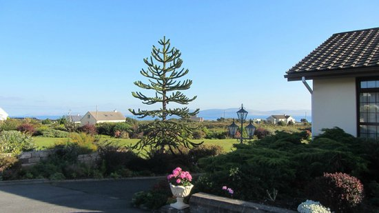 Ardmor Country House Spiddal: A Monkey Puzzle tree on the property