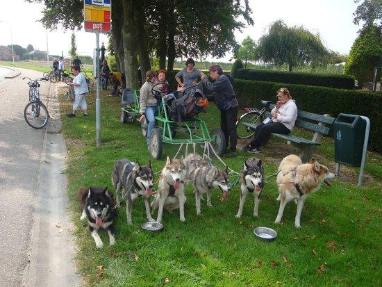Husky Safari - Day Tours: Sfeerbeeld onderweg