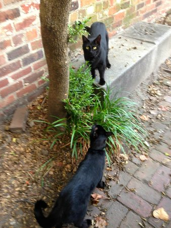 Edgar Allan Poe Museum: Their 2 Black Cats