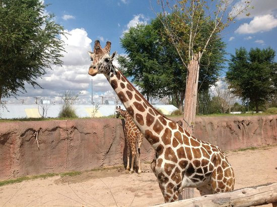 El paso zoo discount coupons