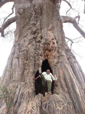 Meru Mountain Treks and Safaris Ltd - Day Tours: A Big Baobab Tree With A Hole-Tarangire N.Park