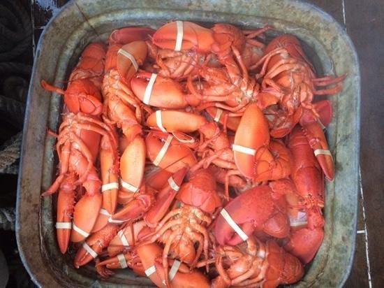 Schooner Stephen Taber Day Cruises: Lobster dinner!
