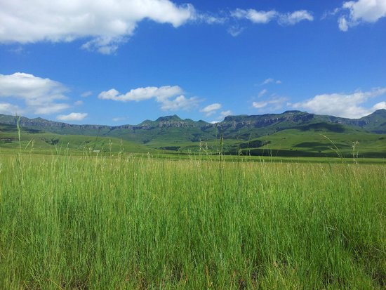 Drakensberg mountains in the background