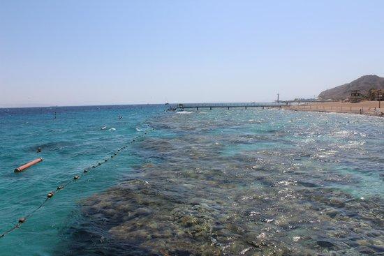 Coral Beach Nature Reserve: more corals