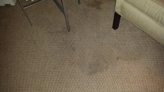 Salem Waterfront Hotel & Suites: Dirty Carpet