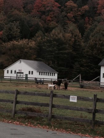 Three Stallion Inn: Front porch room 10 view