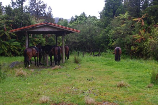 Punakaiki, New Zealand: Stopping for tea and biscuits, the horses take time out too.