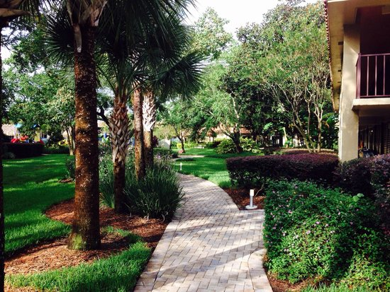 Bosque - Picture of Doubletree by Hilton Orlando at SeaWorld ...