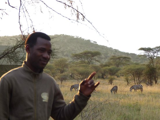Serengeto Osupuko Tented Camp: Salim with zebras grazing close to tent