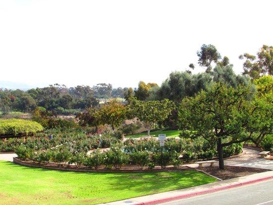 Inez Grant Parker Memorial Rose Garden: belo rosedal