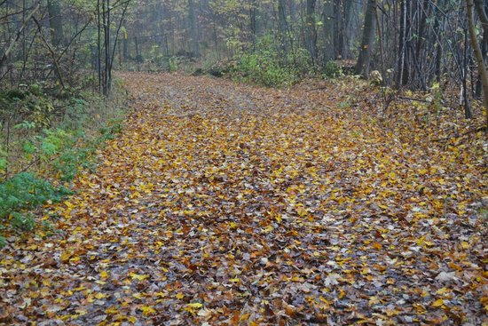 Millcroft Inn & Spa : One of the many trails ... leaves changing colour