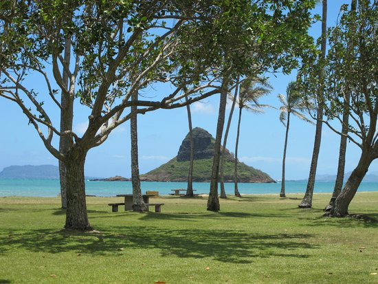 Kualoa Regional Park : view of the island through coconut palms