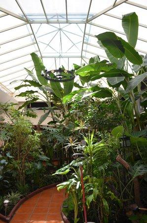 Hotel Jardines del Centro: Jardin