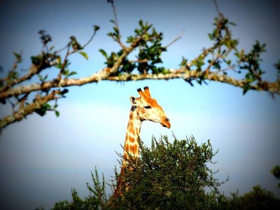 Addo Afrique Estate: Walking Safari at Addo Afrique