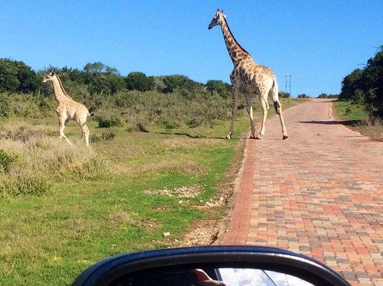 Addo Afrique Estate: Welcoming Committee