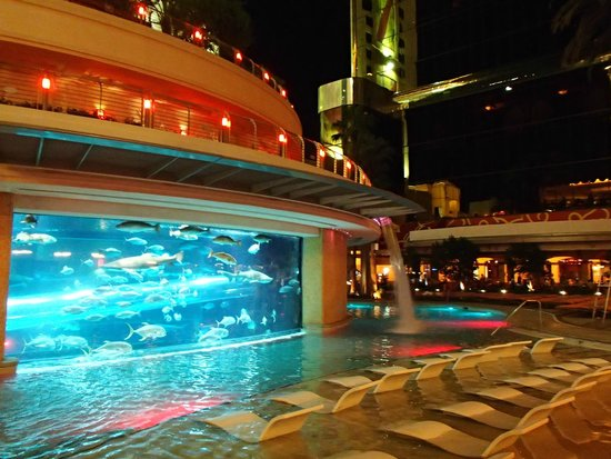 Shark Tank Great Swimming Pool Picture Of Golden Nugget Hotel Las Vegas Tripadvisor