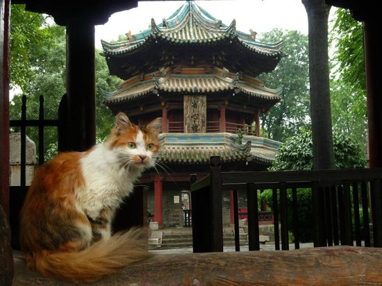 Xi'an Mosque : Big bonus for cat-lovers: it's full of cats :-)