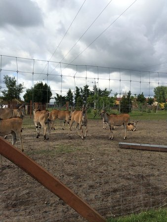 Lodz Zoo : Antelopes
