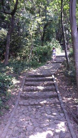 Songjiang Tianma Mountain: 山林間的步道