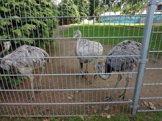 Wild- und Freizeitpark Klotten Cochem: Emu hautnah