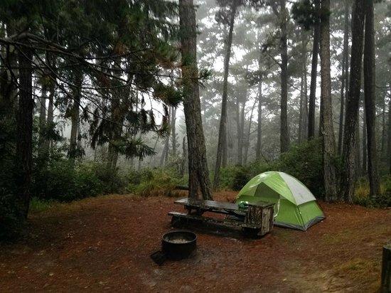 Salt Point State Park: Camp site.