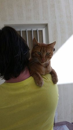 Aumkara Apartments: Ginger cat