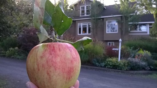 Argyle House Bed and Breakfast: picked from the Argyle House orchard