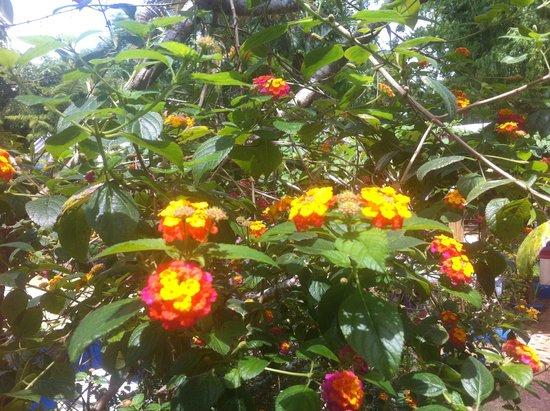 Deep : Beautiful flowers