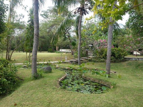 Mimpi Resort Menjangan : Den store have med garden pool