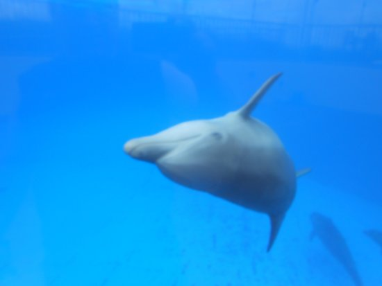 Marineland Dolphin Adventure: One of the awesome dolphins