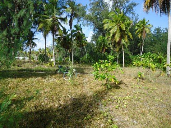 Desroches Island Resort: Way To The Reception Area