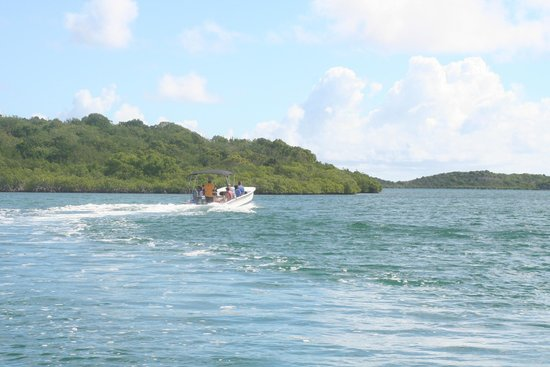 Paddles Snorkel and Kayak Eco Adventure: speed boat heading to mangrove atolls