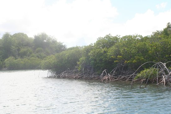 Paddles Snorkel and Kayak Eco Adventure: mangrove atoll  where we kayaked