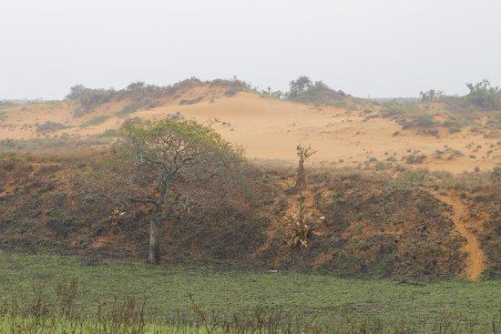 Cape Vidal Camp: Red sand dunes